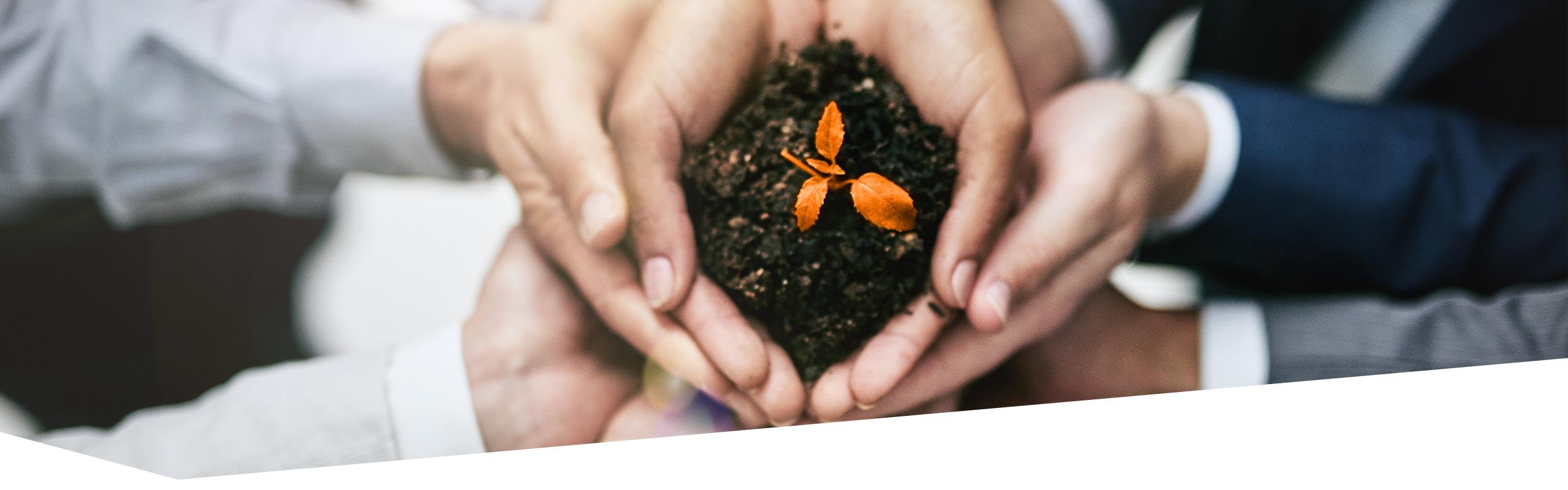 Zur Schale geformte Hände meherer Personen übereinander, in den obersten Händen Erde mit einer orangen keimenden Pflanze